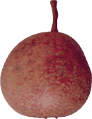 Blood Pear