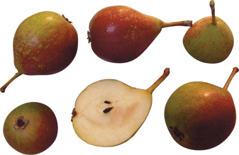 butter-pear