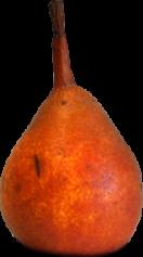 Chapman's Orange