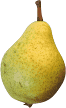Speart Pear