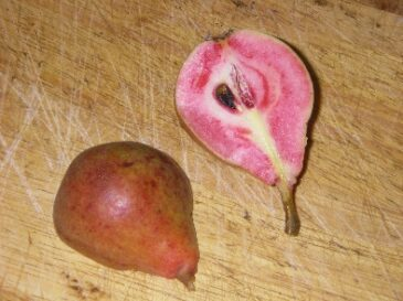 The Blood Pear